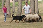 2010-schapen