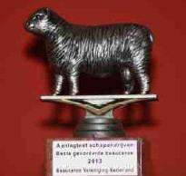 2013-schapen