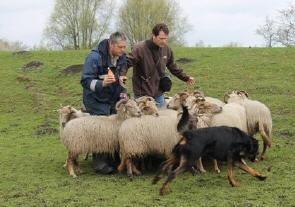 schapen2015